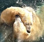 polarbearfans Avatar